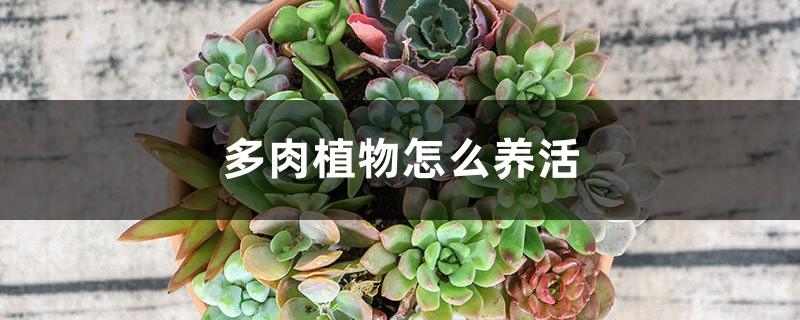 多肉植物怎么养活