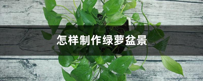怎样制作绿萝盆景