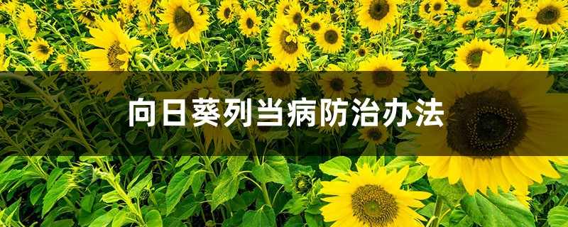 向日葵列当病防治办法
