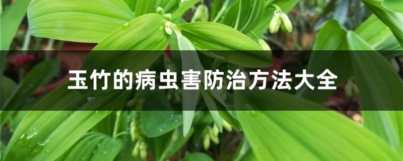玉竹的病虫害防治方法大全