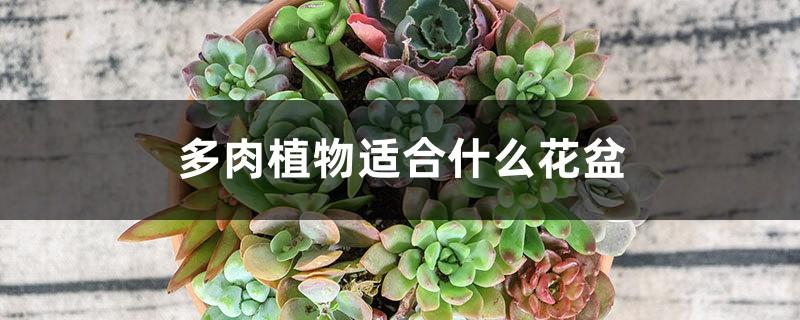 多肉植物适合什么花盆