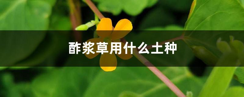酢浆草用什么土种