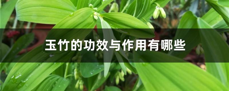 玉竹的功效与作用有哪些