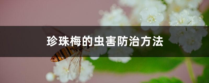 珍珠梅的虫害防治方法