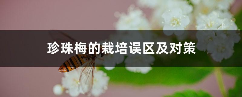 珍珠梅的栽培误区及对策