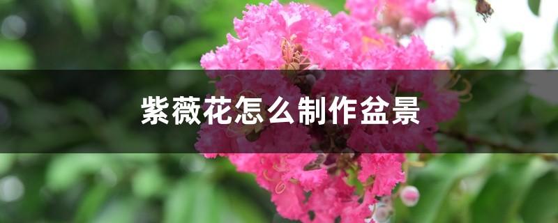 紫薇花怎么制作盆景