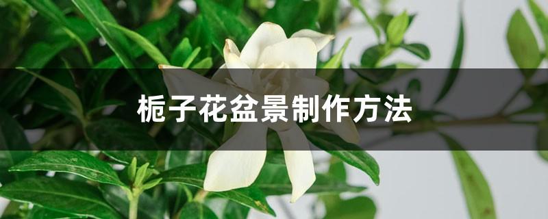 栀子花盆景制作方法