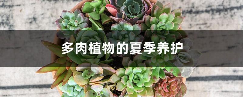 多肉植物的夏季养护