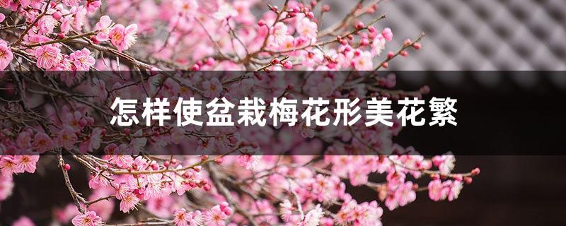 怎样使盆栽梅花形美花繁