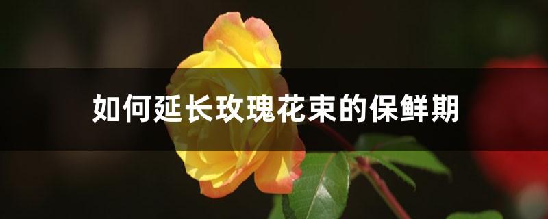 如何延长玫瑰花束的保鲜期