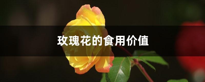 玫瑰花的食用价值