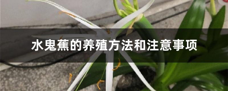 水鬼蕉的养殖方法和注意事项