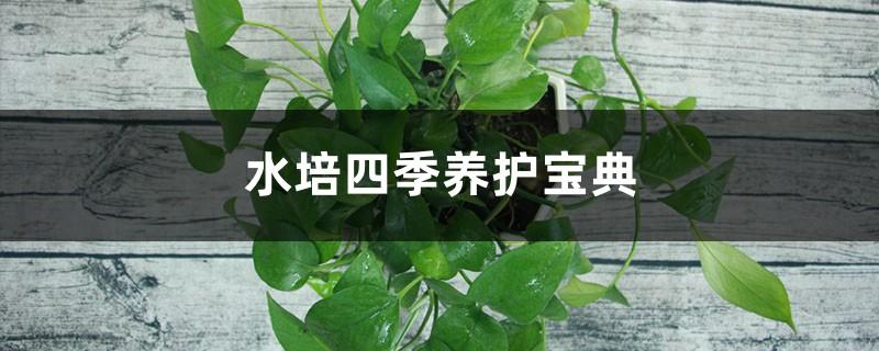 水培四季养护宝典