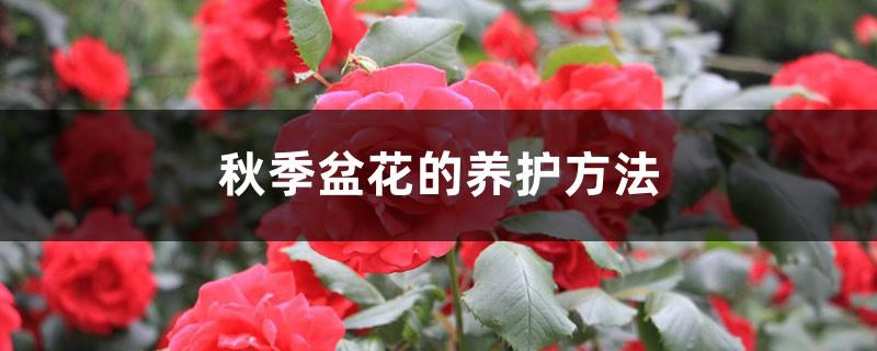 秋季盆花的养护方法