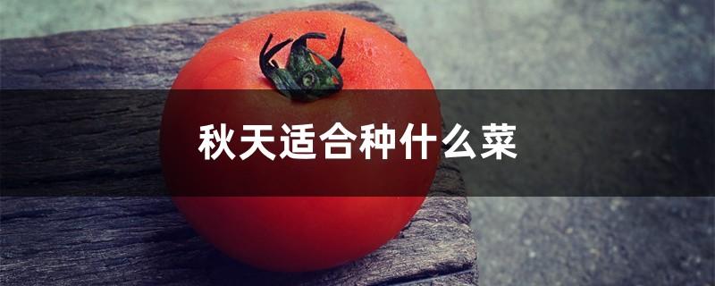 秋天适合种什么菜