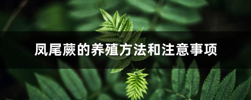凤尾蕨的养殖方法和注意事项
