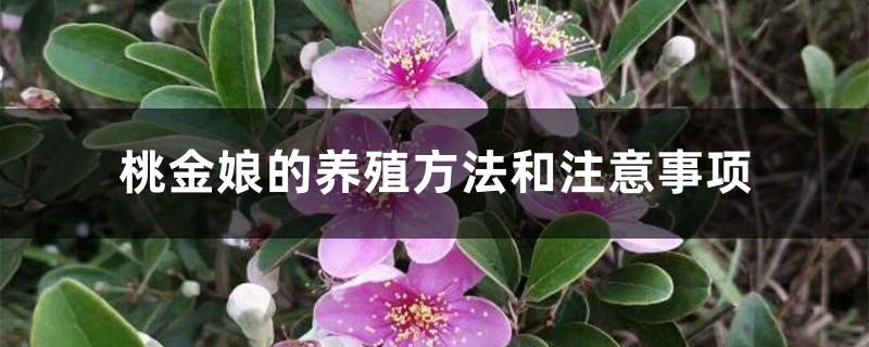 桃金娘的养殖方法和注意事项