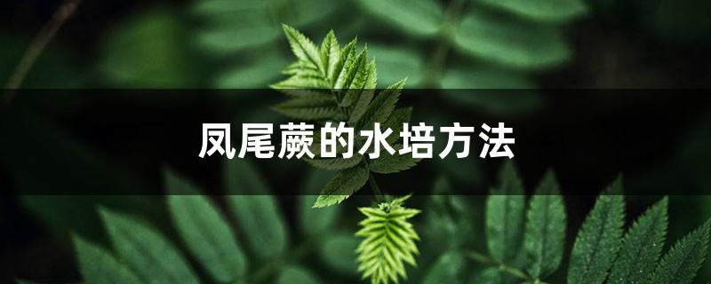 凤尾蕨的水培方法