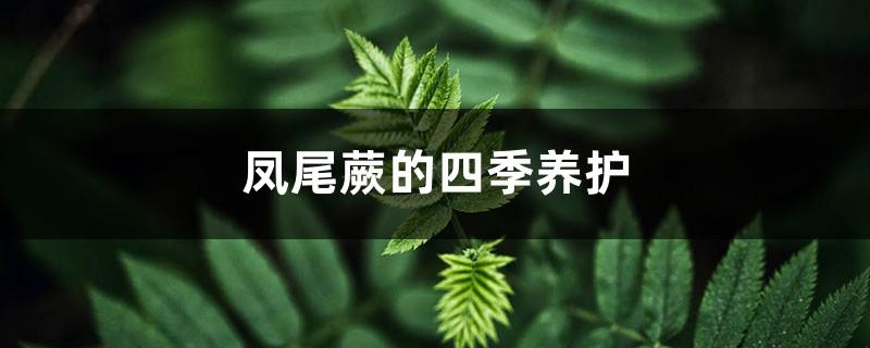 凤尾蕨的四季养护