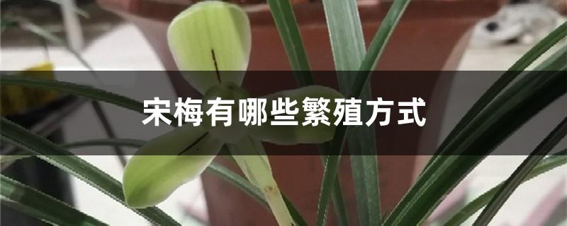 宋梅有哪些繁殖方式