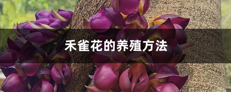 禾雀花的养殖方法