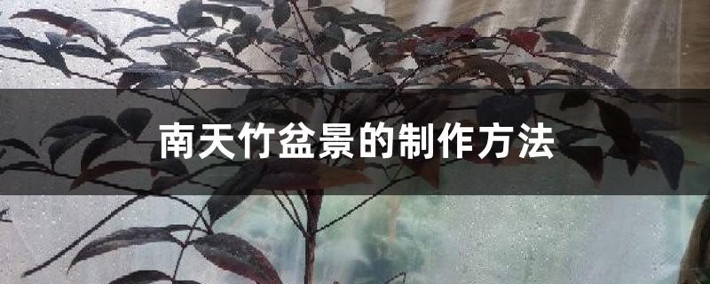 南天竹盆景的制作方法