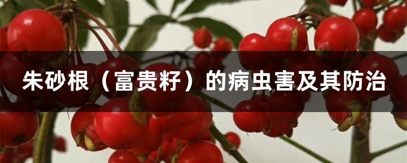朱砂根(富贵籽)的病虫害及其防治