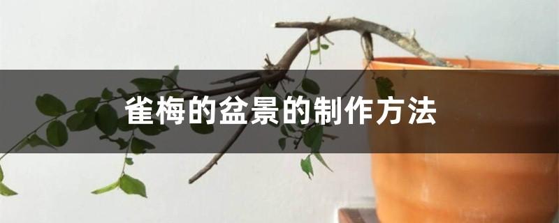 雀梅的盆景的制作方法
