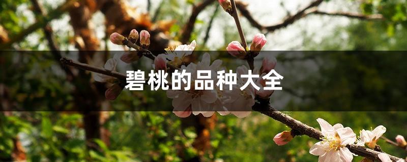 碧桃的品种大全