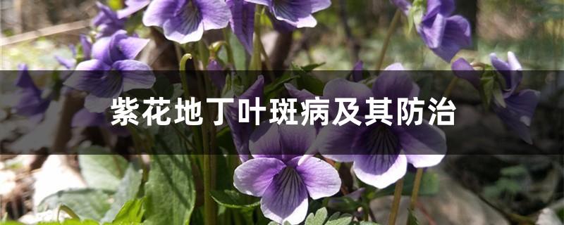 紫花地丁叶斑病及其防治