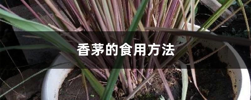 香茅的食用方法