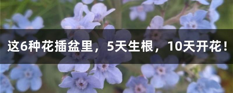 这6种花插盆里,5天生根,10天开花!