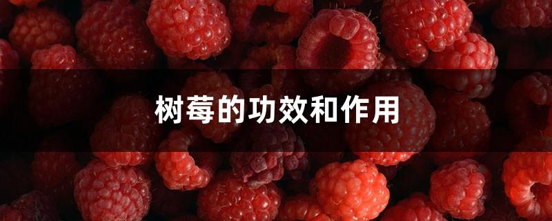 树莓的功效和作用