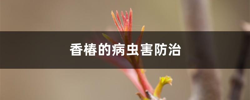 香椿的病虫害防治