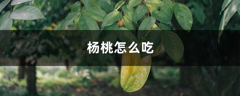 杨桃怎么吃
