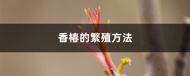 香椿的繁殖方法