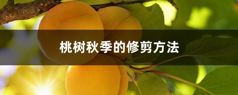 桃树秋季的修剪方法