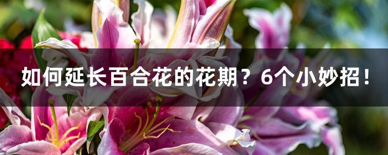 如何延长百合花的花期?6个小妙招!