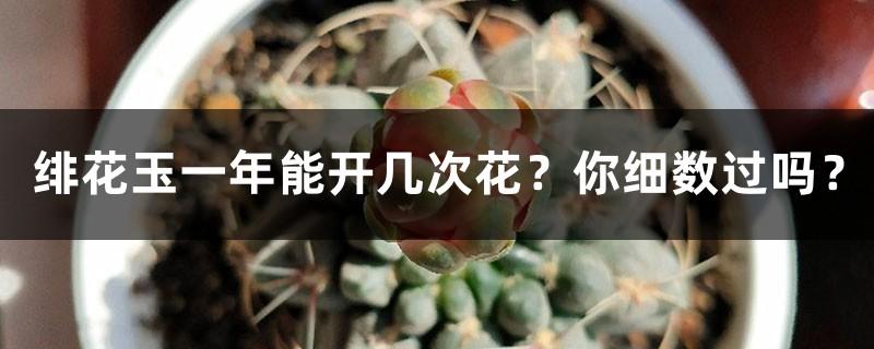 绯花玉一年能开几次花?你细数过吗?