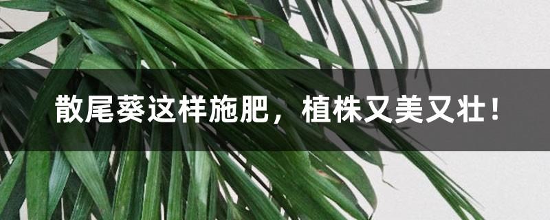 散尾葵这样施肥,植株又美又壮!