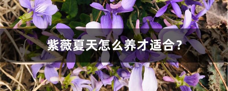 紫薇夏天怎么养才适合?