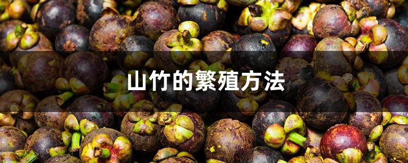 山竹的繁殖方法