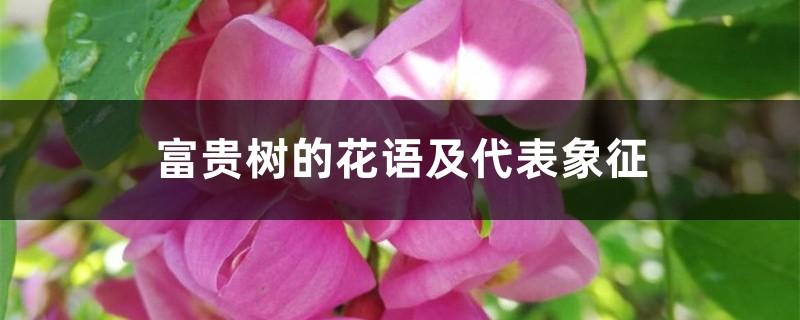 富贵树的花语及代表象征