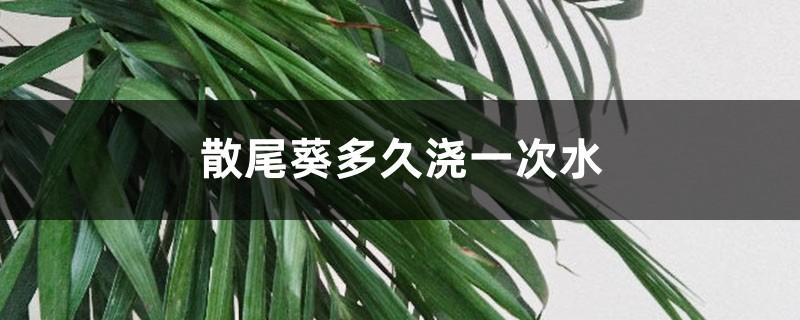 散尾葵多久浇一次水