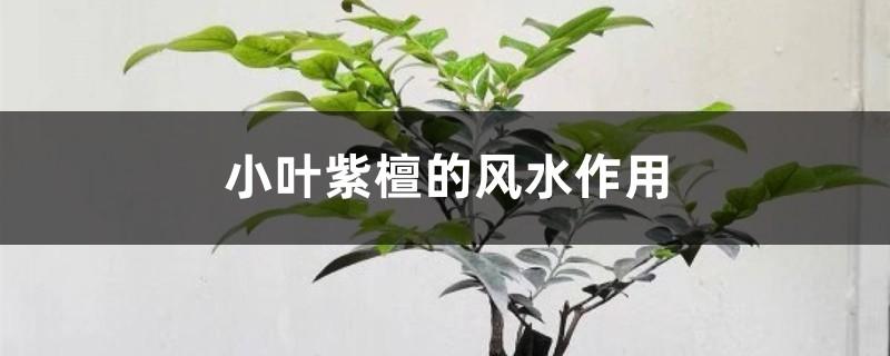 小叶紫檀的风水作用