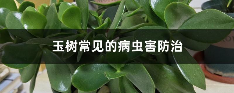 玉树常见的病虫害防治