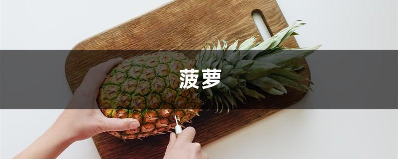 吃完菠萝皮别扔,沤肥没异味,花吃了疯长叶子绿油油!