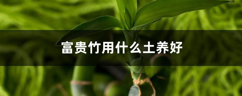 富贵竹用什么土养好