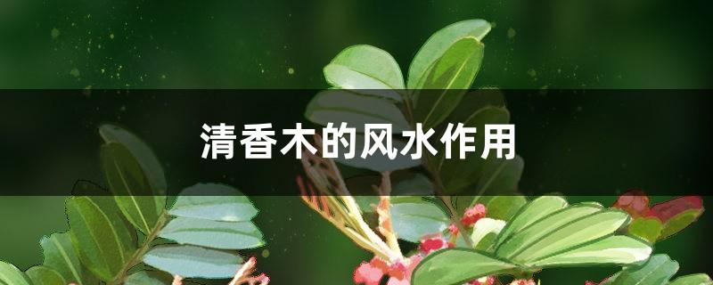 清香木的风水作用