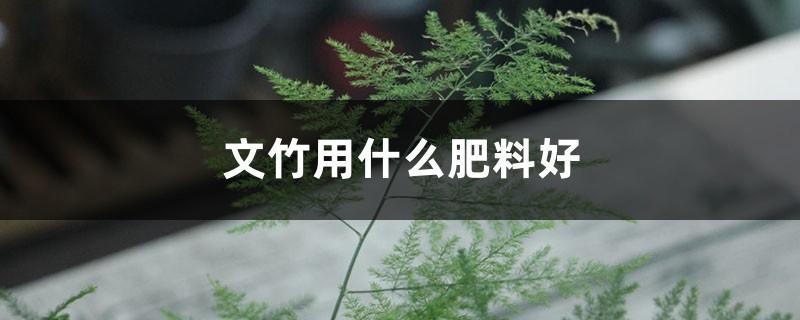 文竹用什么肥料好